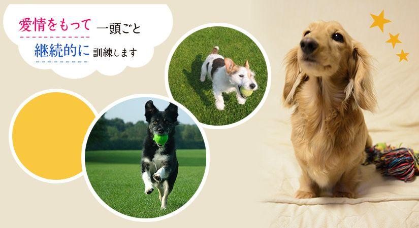 石田愛犬訓練所